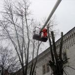 Удаление веток деревьев, Архангельск