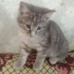 Отдам в добрые руки котенка!!!, Архангельск