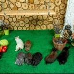 Кролики для разведения,мясо кролика, Архангельск