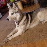 Найдена собака, Архангельск