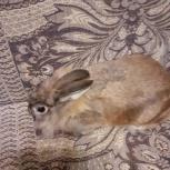 Продам кролика, Архангельск