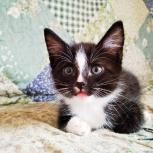 отдадим котенка 1.5 месяца в хорошие руки, Архангельск