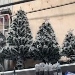 Продам новогодние ёлки, Архангельск