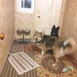 Синдбад домашняя гостиница кошек и собак, Архангельск