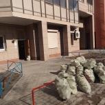 Доски, бревна, различный мусор, Архангельск