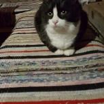 Кошечка ищет хозяина, Архангельск