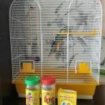 Продам волнистого попугая с клеткой и кормом, Архангельск