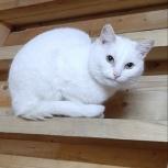 Кошка Маня, Архангельск