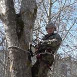 Спилим,срубим деревья,обрезка,выкорчуем пни,благоустройство., Архангельск