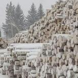 Покупаем круглые лесоматериалы, Архангельск