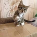 Котёнок, Архангельск