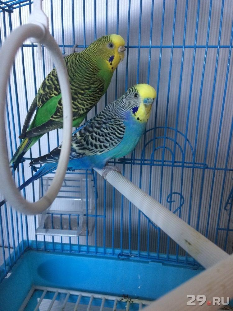 фотки попугаев в клетке третьего